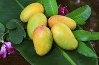 Image: Mangoes